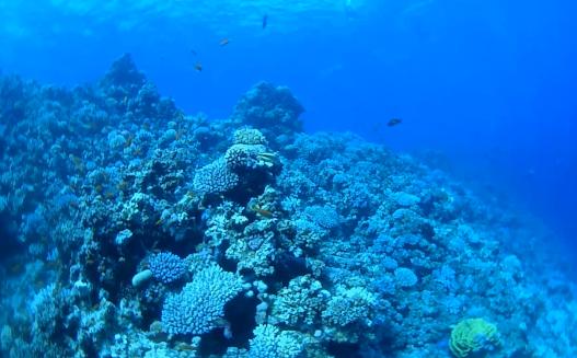 dahab coral